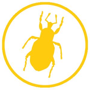 Poncho - Pest 1